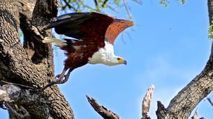 Safari-Victoria Falls-Chobe National Park safari excursion (Victoria Falls)-4