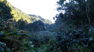 Hiking / Trekking-Cirque de Cilaos-Hiking up Piton Cabris and Les Makes in the Reunion Island-5