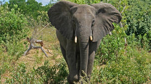 Safari-Victoria Falls-Chobe National Park safari excursion (Victoria Falls)-3