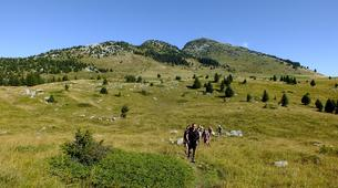 Hiking / Trekking-Le Grand-Bornand, Massif des Aravis-Hiking excursions and fauna observation in Le Grand-Bornand-8