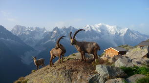 Hiking / Trekking-Le Grand-Bornand, Massif des Aravis-Hiking excursions and fauna observation in Le Grand-Bornand-3