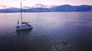 Sailing-Tromsø-Arctic fjord sailing excursion in Tromsø-10