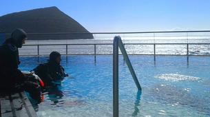 Scuba Diving-Terceira-Discover Scuba Diving in Terceira, Azores-5