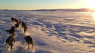 Dog sledding-Geilo-Dog sledding excursion in Geilo-1
