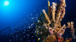 Plongée sous-marine-Les Anses-d'Arlet-Plongée Exploration à Les Anses-d'Arlet, Martinique-4