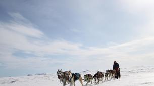 Dog sledding-Geilo-Dog sledding excursion in Geilo-3