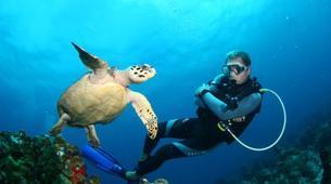 Plongée sous-marine-Les Anses-d'Arlet-Plongée Exploration à Les Anses-d'Arlet, Martinique-1