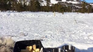 Dog sledding-Geilo-Dog sledding excursion in Geilo-5