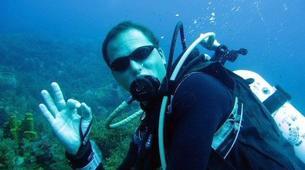 Plongée sous-marine-Les Anses-d'Arlet-Plongée Exploration à Les Anses-d'Arlet, Martinique-2