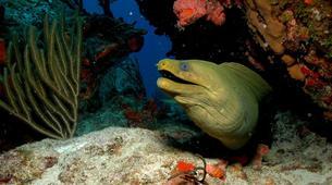 Plongée sous-marine-Les Anses-d'Arlet-Stage PADI Open Water à Les Anses-d'Arlet, Martinique-5