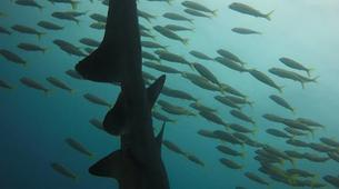 Scuba Diving-Durban-Reef and wreck scuba diving excursions on the Umkomaas coast, near Durban-5