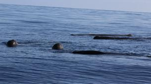 Wildlife Experiences-Terceira-Whale watching from Angra do Heroísmo in Terceira Island-1
