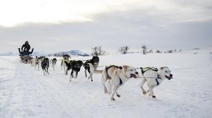 Dog sledding-Tromsø-6D/5N Arctic dog sledding expedition in Tromsø-2