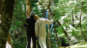 Lancha a Motor-Wanaka-Jet boating excursion and wilderness walk in Wanaka-3