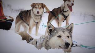 Dog sledding-Tromsø-2 day Arctic dog sledding expedition in Tromsø-2