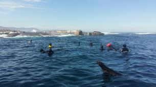 Snorkeling-Cape Town-Snorkel with Seals in Cape Town-3