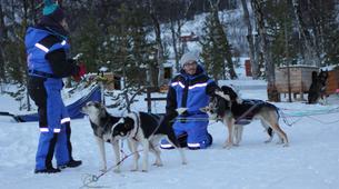 Dog sledding-Tromsø-Dog sledding day excursion in Tromsø-5