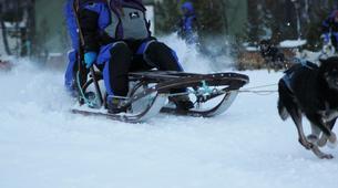 Dog sledding-Tromsø-Dog sledding day excursion in Tromsø-1