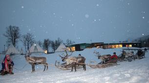 Reindeer sledding-Tromsø-Reindeer sledding day trip in Tromsø-6