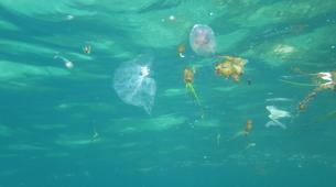 Scuba Diving-Bugibba-Discover Scuba Diving in Bugibba, Malta-6