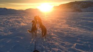 Dog sledding-Tromsø-Arctic evening dog sledding excursion in Tromsø-6