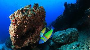 Plongée sous-marine-Castillo del Aguila, Lanzarote-Plongées d'aventure depuis Marina Rubicon, Playa Blanca-2