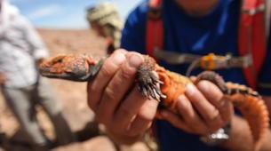 Survival Training-Marrakech-Stage de Survie au Maroc au départ de Marrakech-3