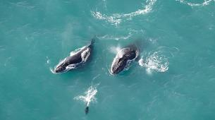 Scenic Flights-Kaikoura-Whale watching flight from Kaikoura-1