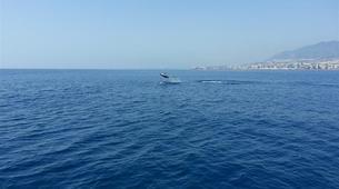 Wildlife Experiences-Fuengirola-Dolphin Watching boat tour from Fuengirola-9