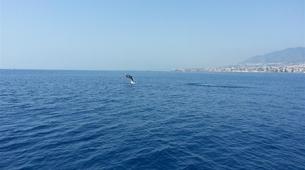 Wildlife Experiences-Fuengirola-Dolphin Watching boat tour from Fuengirola-7
