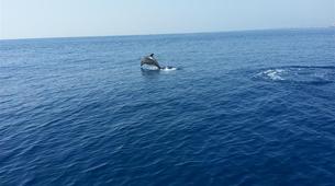 Wildlife Experiences-Fuengirola-Dolphin Watching boat tour from Fuengirola-8