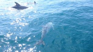 Wildlife Experiences-Fuengirola-Dolphin Watching boat tour from Fuengirola-5
