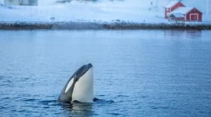 Wildlife Experiences-Tromsø-Whale Watching Safari & Fjord Cruise from Tromso-1