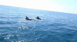 Wildlife Experiences-Fuengirola-Dolphin Watching boat tour from Fuengirola-3