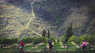 Mountain bike-Queenstown-Supported mountain biking on the Queenstown Trails-4
