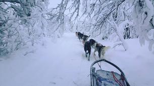 Dog sledding-Kiruna-Morning Dog sledding Tour, near Kiruna-2