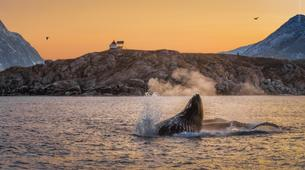Wildlife Experiences-Tromsø-Whale Watching Safari & Fjord Cruise from Tromso-3