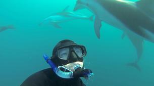Wildlife Experiences-Kaikoura-Swimming with Dolphins in Kaikoura-5