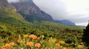 Randonnée / Trekking-Le Cap-Hike to Kirstenbosch Gardens in Cape Town-3