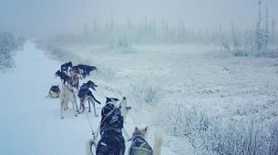 Dog sledding-Kiruna-Morning Dog sledding Tour, near Kiruna-6