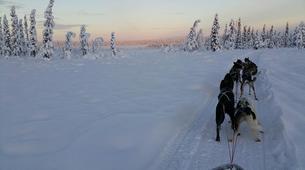 Dog sledding-Kiruna-Morning Dog sledding Tour, near Kiruna-1