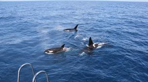 Wildlife Experiences-Tauranga-Swimming with dolphins in the Bay of Plenty-6