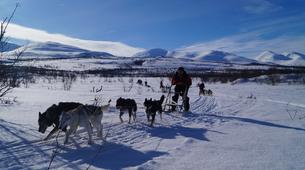 Dog sledding-Abisko-Drive Your Own Dogsled in the Arctic Circle-3