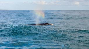 Tierwelt Abenteuer-Hermanus-Whale watching trip from Hermanus-4