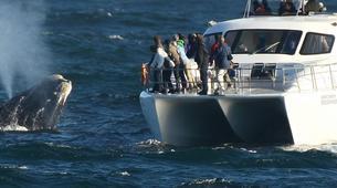 Tierwelt Abenteuer-Hermanus-Whale watching trip from Hermanus-1