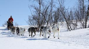 Dog sledding-Abisko-Dog Sledding Adventure in the Arctic Circle-1