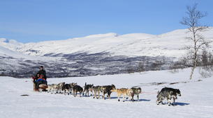 Dog sledding-Abisko-Dog Sledding Adventure in the Arctic Circle-5