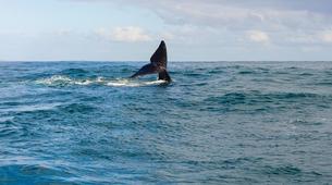 Tierwelt Abenteuer-Hermanus-Whale watching trip from Hermanus-2
