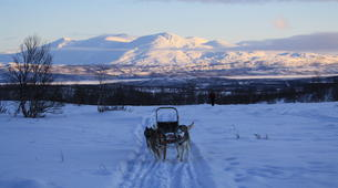 Dog sledding-Abisko-Dog Sledding Adventure in the Arctic Circle-4