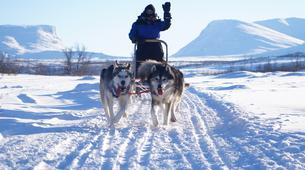 Dog sledding-Abisko-Drive Your Own Dogsled in the Arctic Circle-6